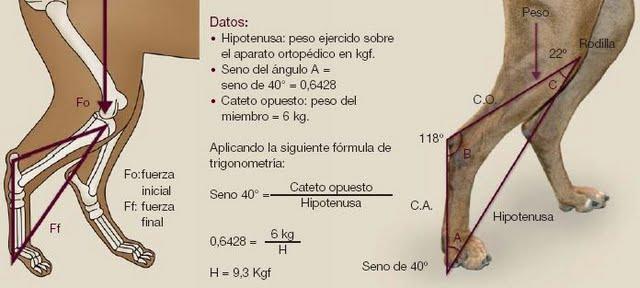 Fisioterapia: Casos Clínicos Dr. Roberto Rodrigues Ricco